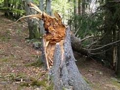 Zertifizierte Baumkontrolle