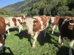 Biorindfleisch